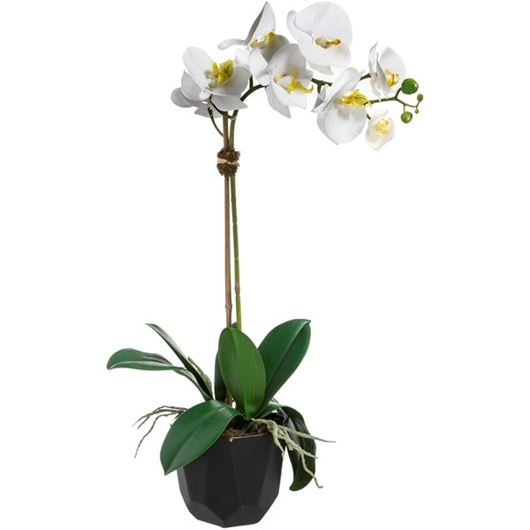 Picture of ORCHID pot h60cm white/black
