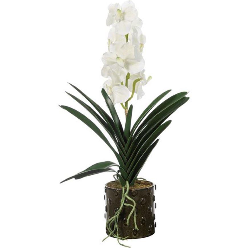 Picture of VANDA pot h64cm white/green