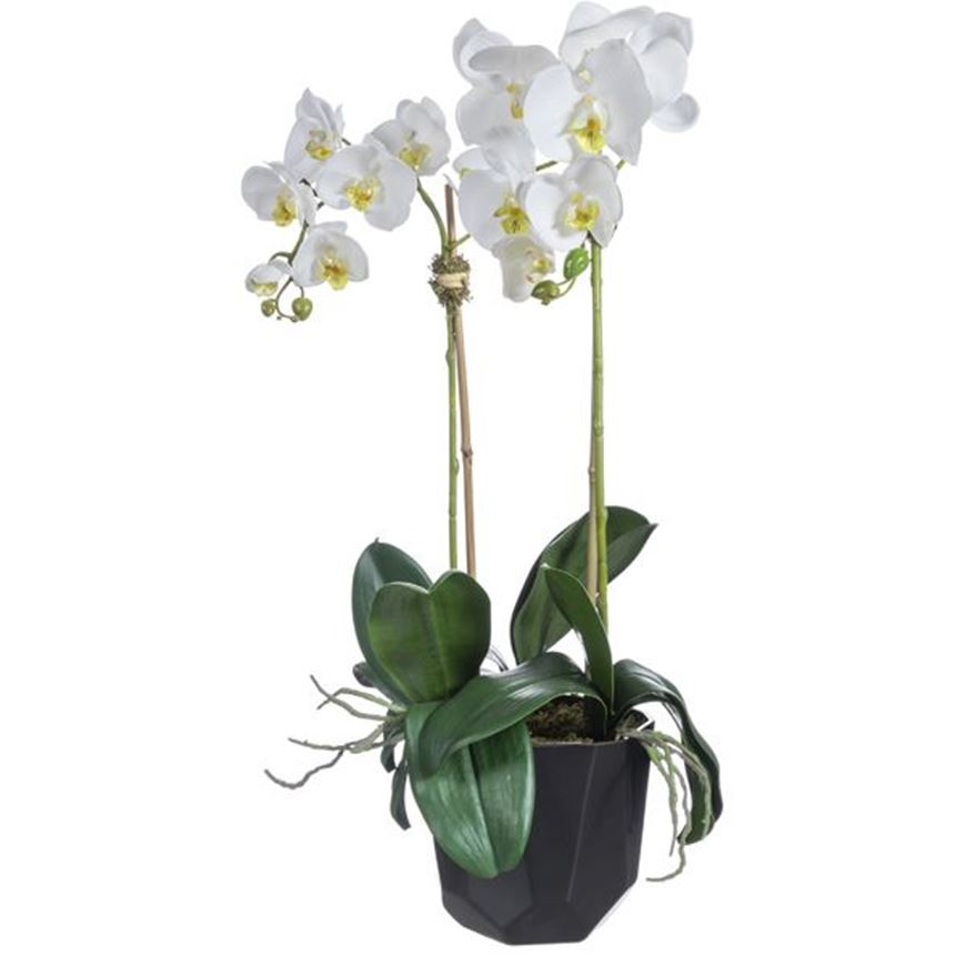 ORCHID pot h70cm white/black