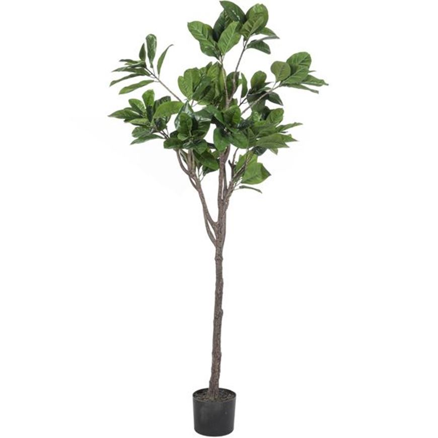 Picture of RUBBER tree h180cm green
