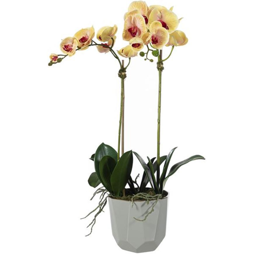 Picture of ORCHID pot h70cm yellow/cream