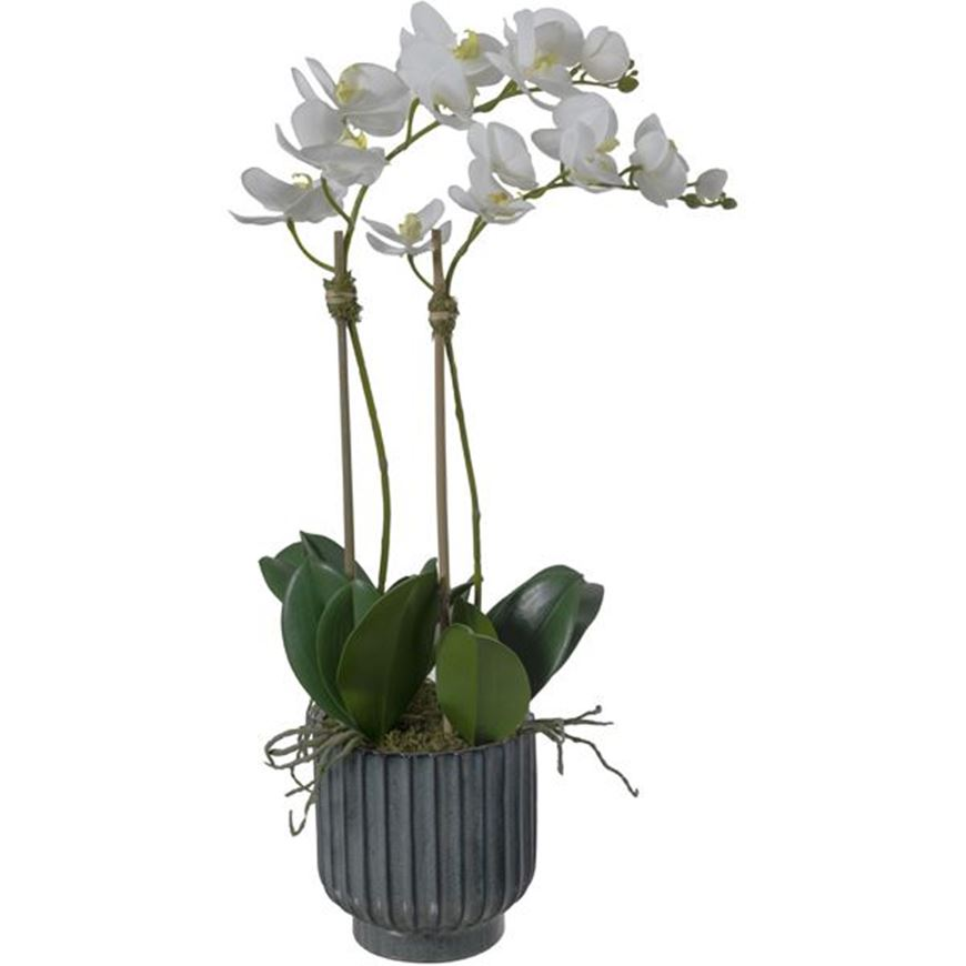 Picture of ORCHID pot h70cm white/assorted