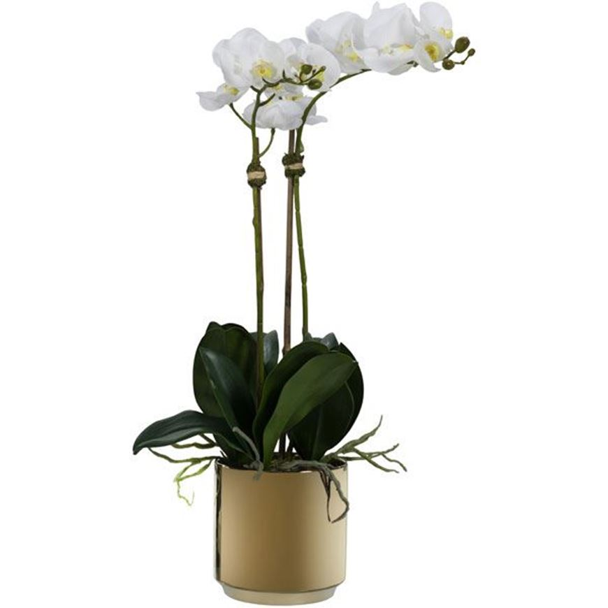 Picture of ORCHID pot h70cm white/gold